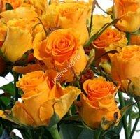 Кустовая роза Сфинкс Голд (Sphinx Gold)