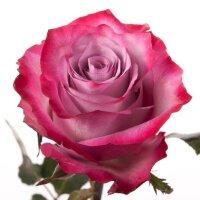 Чайно-гибридная роза Белла Вита (Bella Vita)